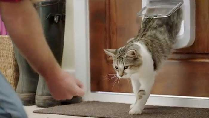 man training a cat to use the 4-way microchip door flap