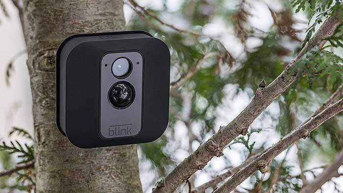 Weatherproof Blink XT camera on a tree