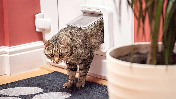 Cat passing through a small door flap