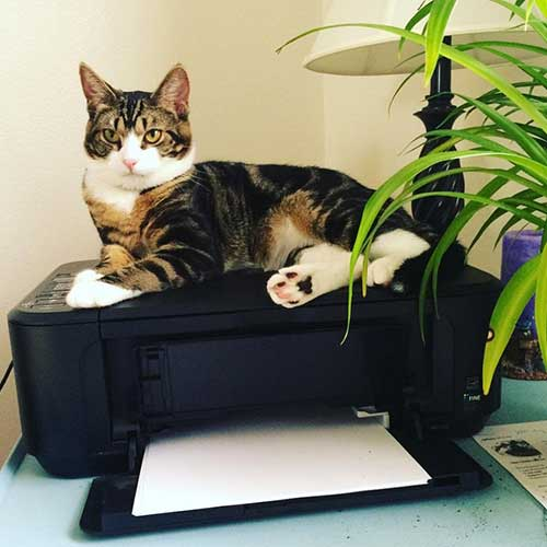 Cat sitting on a black printer at a home office desk