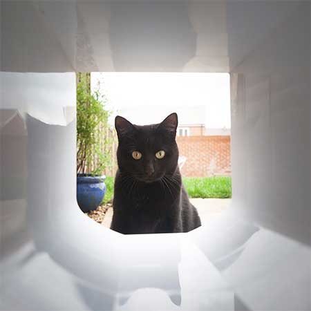 Cat looking through the sureflap tunnel extender