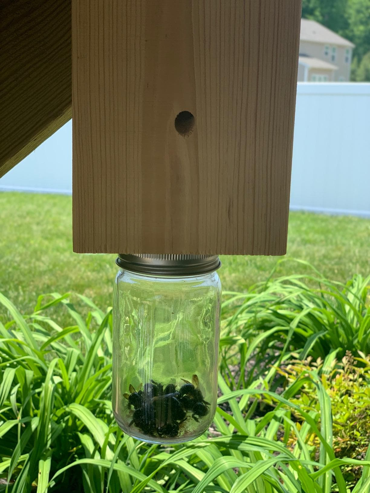 cbs carpenter bee trap image