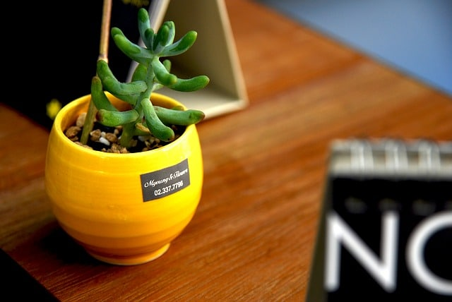 Small cactus on a desk in a yellow pot