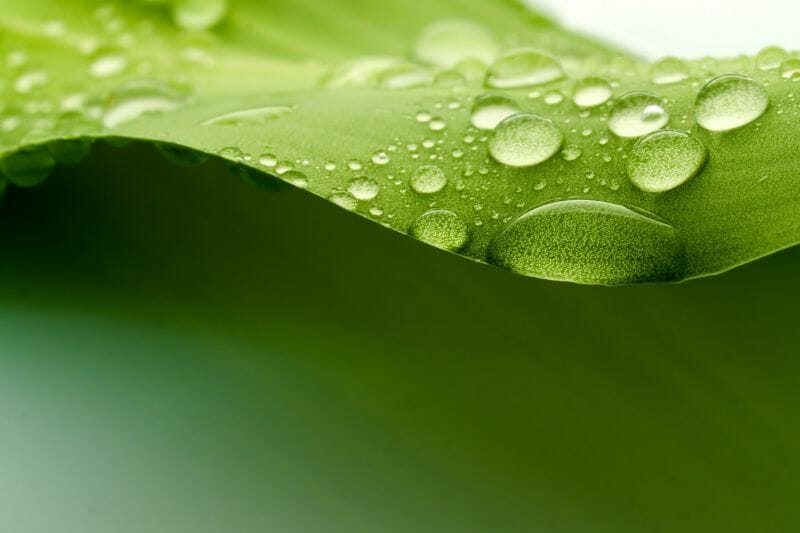 humid leaf with a droplet of water on it