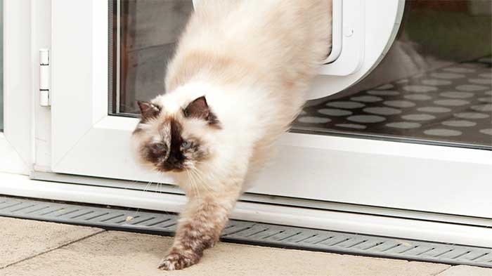 white cat passing through a hole in a windowed door